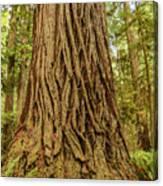 Patterned Redwood Canvas Print