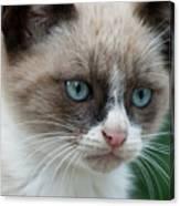 Pauls Little Cat Canvas Print