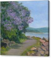 Paulownia Along The Nyack Trail Canvas Print