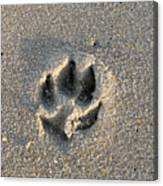 Pawprint In The Sand Canvas Print