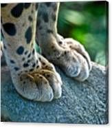 Paws For Effect Canvas Print