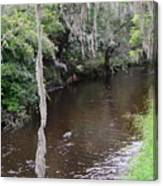 Paynes Creek Canvas Print