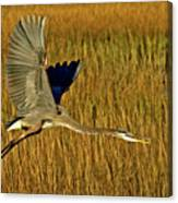 Pb296601 Great Blue Heron Canvas Print