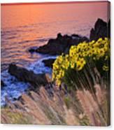 Pch Sunset Canvas Print