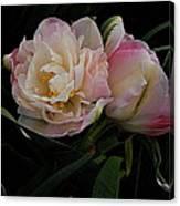 Pe0ny Tulip Duet 2 Canvas Print