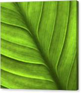 Peace Lily Leaf Canvas Print