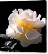 Peace Rose Inner Light Canvas Print
