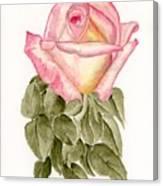 Peace Rosebud Canvas Print