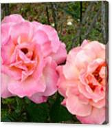 Peace Roses Canvas Print