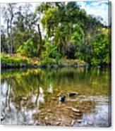 Peaceful Morning On Cibolo Creek Canvas Print