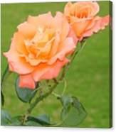 Peach And Gold Roses Canvas Print