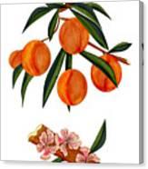 Peach And Peach Blossoms Canvas Print