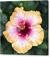 Peach And Pink Canvas Print