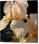 Peach Bearded Iris Canvas Print