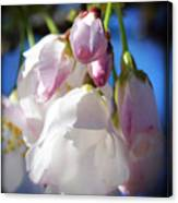 Peach Blossoms Upclose And Personal Canvas Print