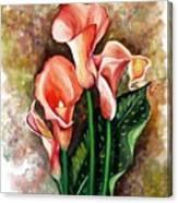 Peach Callas Canvas Print