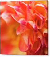 Peach Color Dahlia Canvas Print