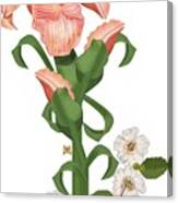 Peach Colored Iris Botanical Canvas Print