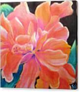 Peach Double Hibiscus Canvas Print