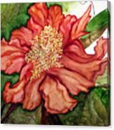 Peach Drama Canvas Print