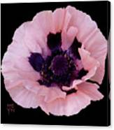 Peach Poppy - Cutout Canvas Print