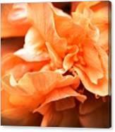 Peach Ripples Canvas Print