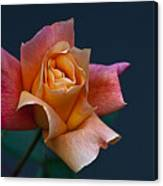 Peach Rose Bud Canvas Print