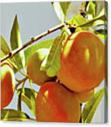 Peaches On The Tree Canvas Print