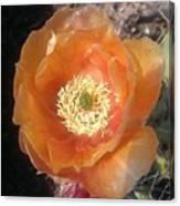Peachy Opuntia Flower Canvas Print