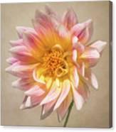 Peachy Pink Dahlia Close-up Canvas Print
