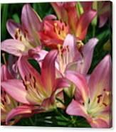 Peachy Pink Lilies Canvas Print