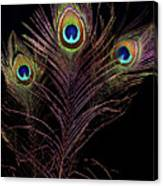 Peacock 4 Canvas Print