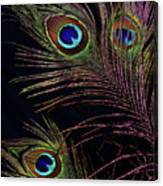 Peacock 5 Canvas Print