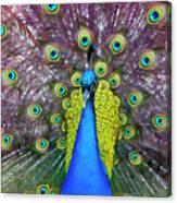 Peacock Art Canvas Print