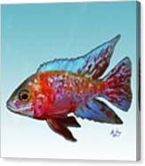 Peacock Cichlid Canvas Print