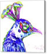 Peacock Closeup Canvas Print