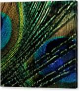 Peacock Eyes Canvas Print