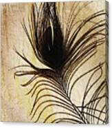 Peacock Feather Silhouette Canvas Print
