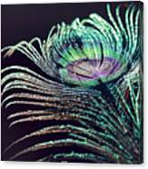 Peacock Feather With Dark Background Canvas Print