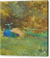 Peacock In A Garden Canvas Print