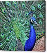 Peacock In A Oak Glen Autumn 2 Canvas Print