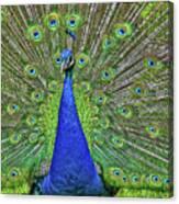 Peacock In A Oak Glen Autumn 3 Canvas Print