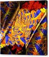 Peacock Parts Canvas Print