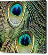 Peacock Pavo Cristatus Feather Detail Canvas Print