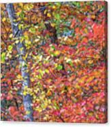 Peak Color Canvas Print