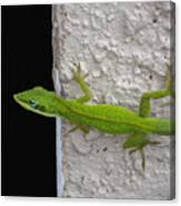 Peaking Lizard Canvas Print