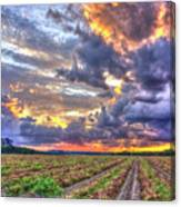 Peanuts, Clouds And Sun Canvas Print