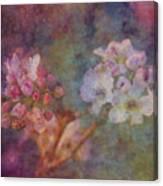 Pear Blossom Morning Impression 8941 Idp_2 Canvas Print