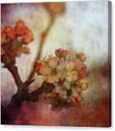Pear Blossom Sunset 8930 Idp_2 Canvas Print