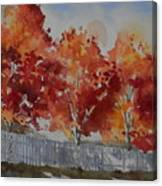Pear Trees Fall Afternoon Canvas Print
